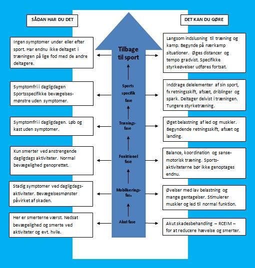 Genoptræningsfaser figur 2.0